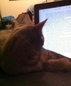 Kitten-assisted reading.
